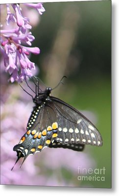 Flutter Bye Metal Print by French Toast