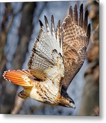 Fly Away Metal Print by Bill Wakeley