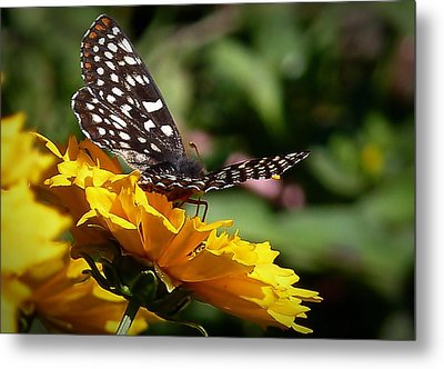 Metal Print featuring the photograph Fly Away by Julia Hassett