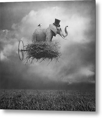 Fly Metal Print by Beata Bieniak