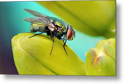 Metal Print featuring the photograph Fly By by Cathy Donohoue
