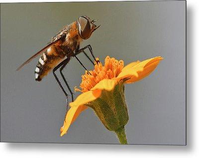 Fly Resting On Wildflower, Edinburg Metal Print
