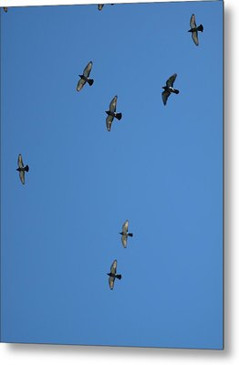Fly Through The Sky's Ceiling Metal Print