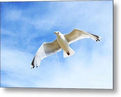 Fly With Me... Metal Print