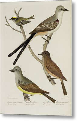 Flycatcher And Wren Metal Print by British Library