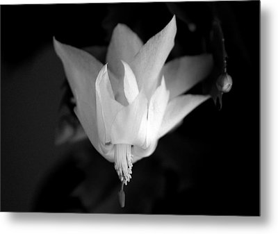 Metal Print featuring the photograph Flying Cactus by Silke Brubaker