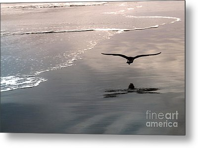 Flying Close To The Ground Metal Print by Gregory Dyer