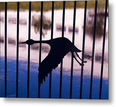 Flying Fence Metal Print