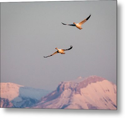 Metal Print featuring the photograph Flying High by Jack Bell