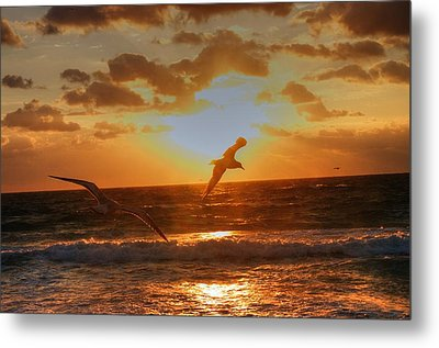 Metal Print featuring the photograph Flying In The Sun by Dennis Baswell
