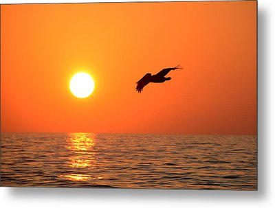 Flying Into The Sun Metal Print by David Lee Thompson