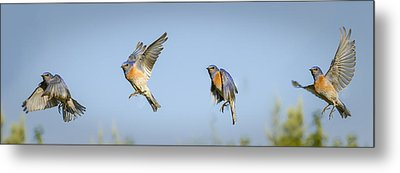 Flying Metal Print by Jean Noren