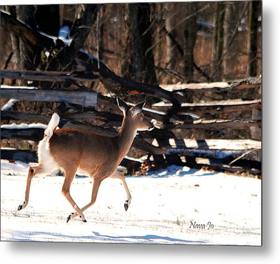 Metal Print featuring the photograph Flying Over The Snow by Nava Thompson