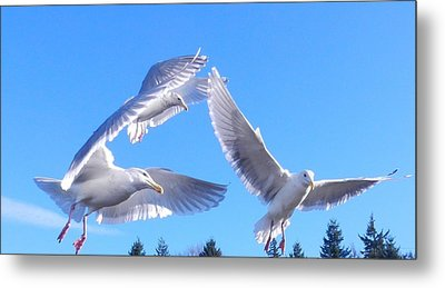Metal Print featuring the photograph Flying Seagulls by Karen Molenaar Terrell