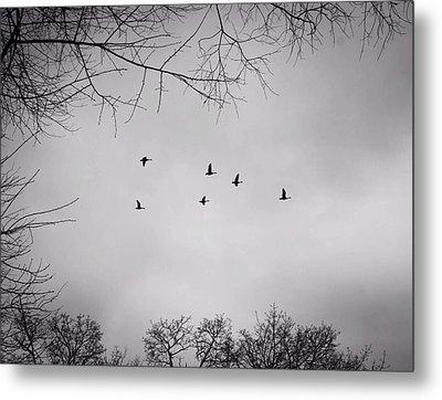 Flying South Metal Print by Richie Stewart