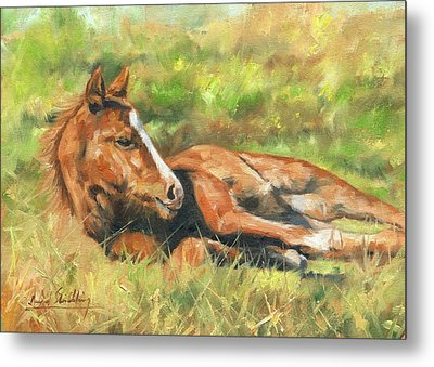 Foal Metal Print by David Stribbling