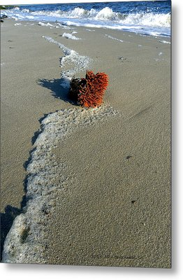 Foam And Seaweed On The Beach Metal Print