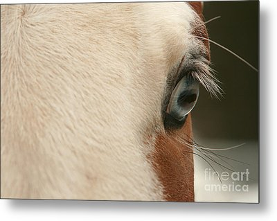 Focus Front Metal Print by Michelle Twohig