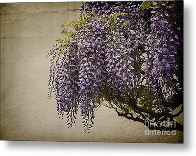 Focus On Wisteria Metal Print by Terry Rowe