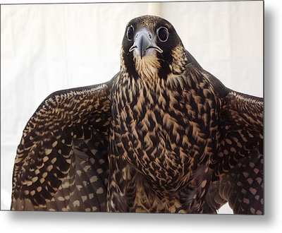 Metal Print featuring the photograph Focus by Richard Faulkner
