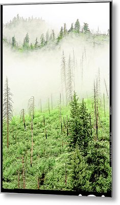 Metal Print featuring the photograph Fog And Trees by Craig Perry-Ollila