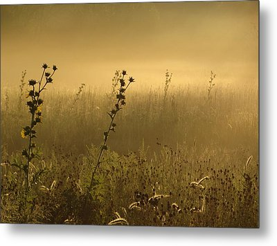 Fog At Dawn Metal Print by Tim Good