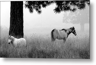 Metal Print featuring the photograph Fog Bound by Julia Hassett