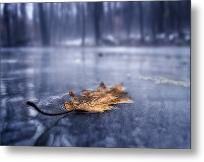 Fog Ice Leaf Metal Print by Craig Szymanski