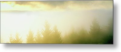 Fog Over Trees, Grasshopper Peak Metal Print by Panoramic Images