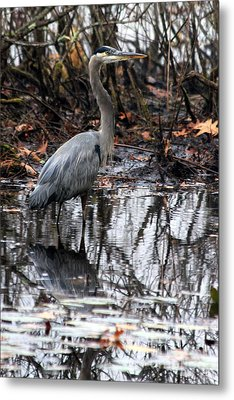 Metal Print featuring the photograph Foggy Bog Heron by Kenny Glotfelty