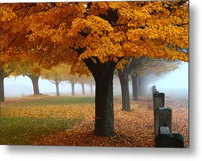 Foggy Fall Morning Metal Print by Lynn Hopwood