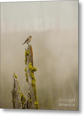 Foggy Friend Metal Print by Birches Photography