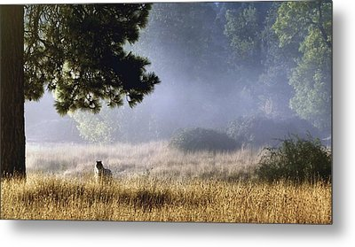 Metal Print featuring the photograph Foggy Grotto by Julia Hassett