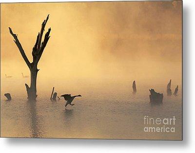 Foggy Landing Metal Print by Elizabeth Winter