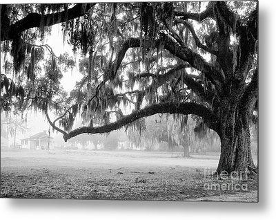 Foggy Morning On Coosaw Plantation Metal Print by Scott Hansen