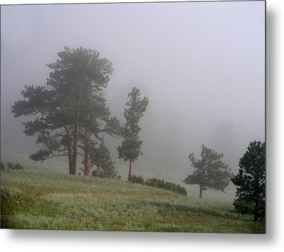 Metal Print featuring the photograph Foggy Pines by Craig T Burgwardt