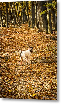 Metal Print featuring the photograph Follow Me by Phil Abrams