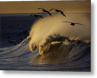 Metal Print featuring the photograph Follow The Leader 73a2324 by David Orias