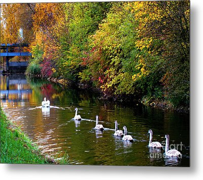 Metal Print featuring the photograph Follow The Leader by Charles Lupica