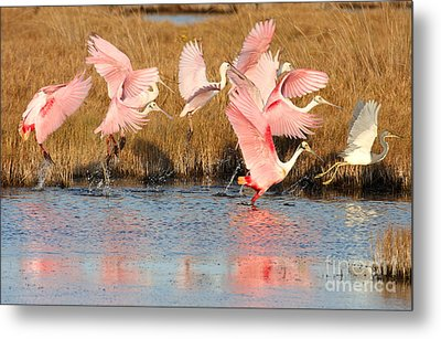 Follow The Leader Metal Print by Jennifer Zelik