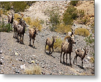 Follow The Leader Metal Print by Tammy Espino