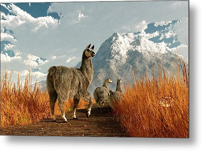 Follow The Llama Metal Print by Daniel Eskridge