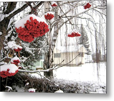 For The Birds Metal Print by Shirley Sirois