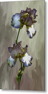 For The Love Of Iris Metal Print by Diane Schuster