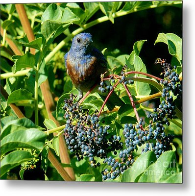For You - Blue  - 2 Metal Print by Jacquelyn Roberts