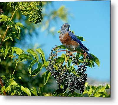 For You - Blue Metal Print by Jacquelyn Roberts