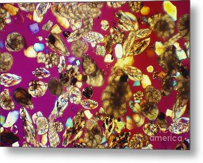 Foraminifera Lm Metal Print by Charles Gellis