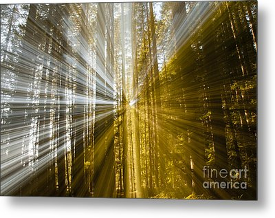 Forest Abstract Metal Print