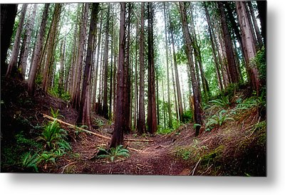 Metal Print featuring the photograph Forest by Adria Trail
