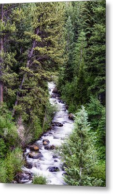 Forest Cascade Metal Print by The Forests Edge Photography - Diane Sandoval